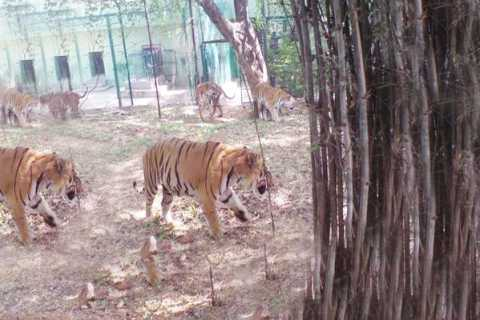 Private Bannerghatta National Park Day Excursion
