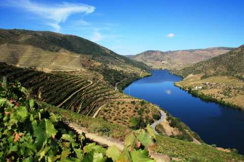 Douro Valley: Full Day Tour w/ Wine Tasting & River Cruise