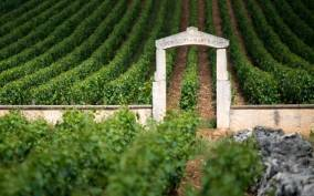 Burgundy Vineyards: Luxury Private Tours