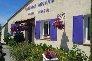 Ab Avignon: Lavendelmeer in Valensole