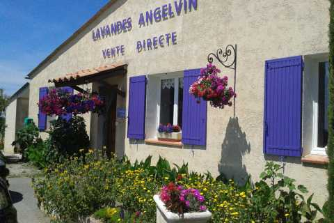 From Avignon: Lavender Ocean in Valensole