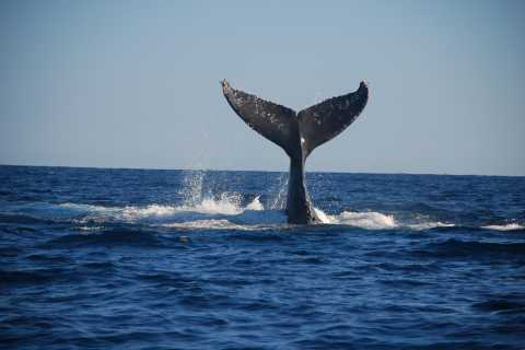 Majestic Whale Watching Adventure