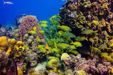 Punta Cana: tour de 1día de esnórquel en Isla Catalina