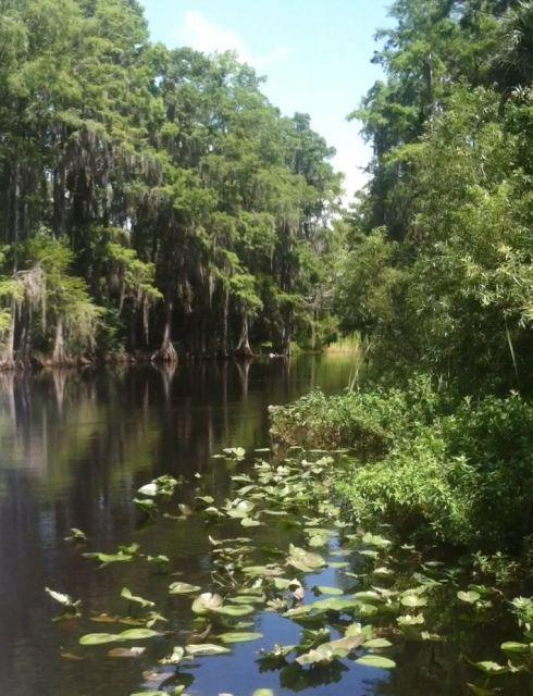Best Everglades Tours From Orlando, Florida