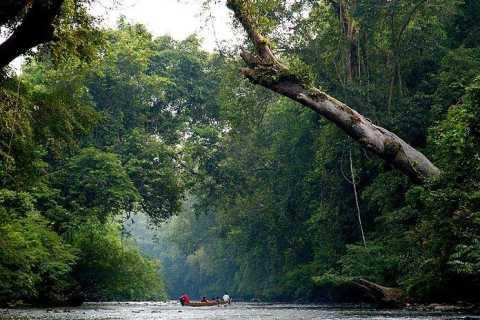 Ab Kuala Lumpur: Private Tagestour nach Taman Negara