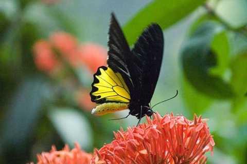 Kuala Lumpur: Privattour - Vogelpark, Schmetterling & Garten