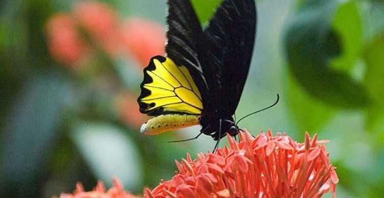 Kuala Lumpur: Bird Park, Butterfly & Garden Private Tour