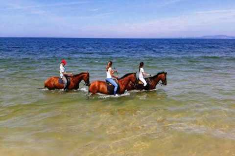 Horses in the Sand Private Tour