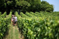 De Bordeaux: Degustação de Vinhos em Saint-Emilion