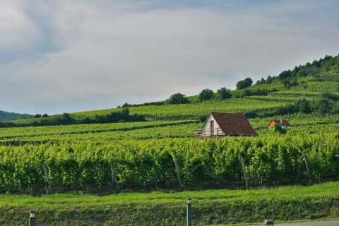 Budapest: Tokaj Wine Country Day-Trip