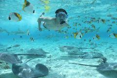 Bora Bora: Excursão Snorkel com Tubarões