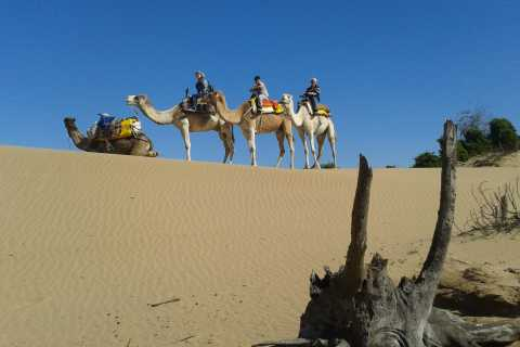 Full-Day Dromedary Ride in Essaouira