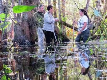 Everglades: 1,5-stündiger Gruppen-Rundgang durch den Sumpf
