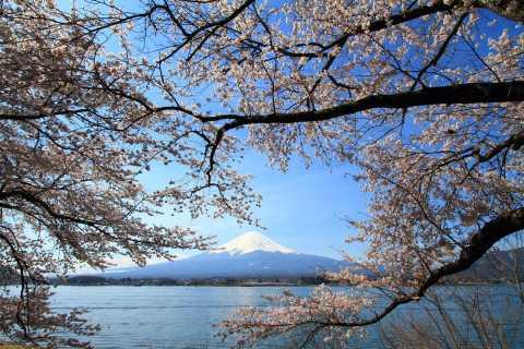 Monte Fuji: tour de día completo desde Tokio con almuerzo