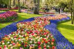 Keukenhof Gardens 5-Hour Group Tour in Spanish