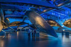 Reykjavik: Baleias de bilhete de entrada Islândia Exposição