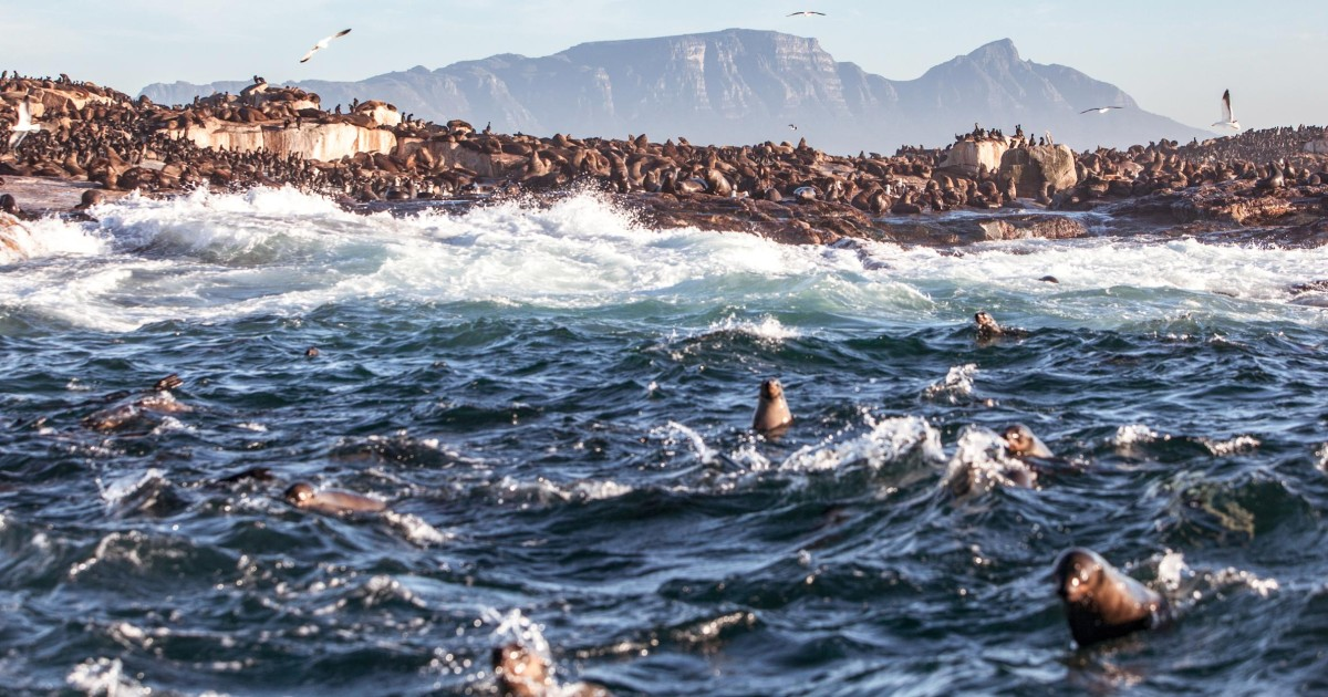 Township & Robben Island Combination Tour with Hotel Pickup