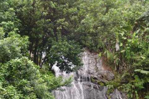 San Juan: El Yunque Rainforest Half-Day Tour