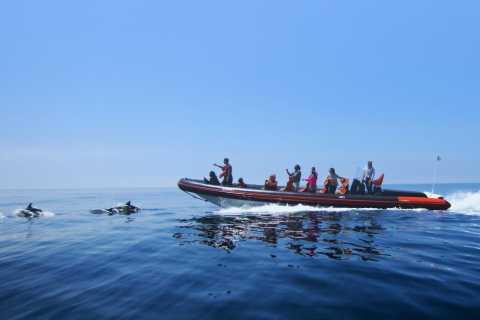 Dolphin Safari and Cave Tour in Vilamoura
