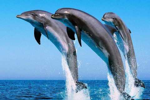 Hurghada: nuoto con i delfini, snorkeling e pranzo