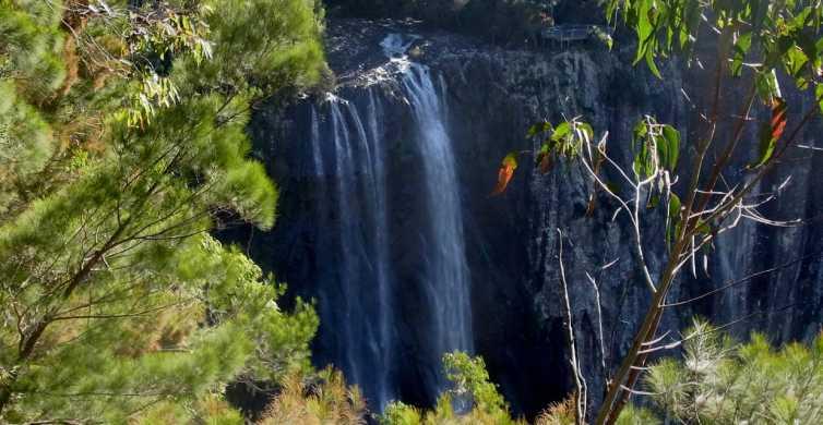 Byron Bay Hinterland: Nationalpark- und Wasserfälle-Tour