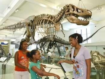 American Museum of Natural History: Eintrittskarte