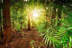 Florestas tropicais e brilho caverna Worm: dia de passeio a partir de Brisbane