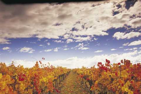 Yarra Valley Wine and Food Day Tour