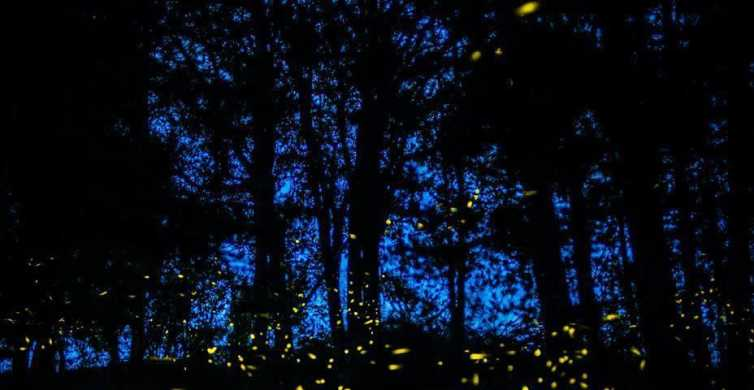 Tour of Tlaxcala and Sanctuary of the Fireflies