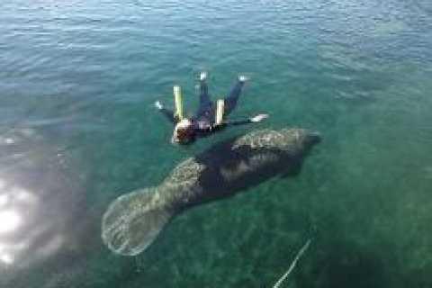 佛罗里达水晶河3小时与海牛游泳