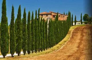 Ab Rom: Private Tagestour durch die Toskana