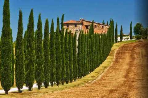 From Rome: Private Day-Tour of Tuscany