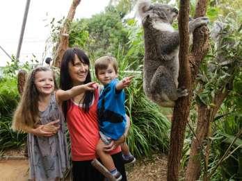 Sydney: 2, 3 oder 4 Multi-Attraction Pass & Hafenahrt