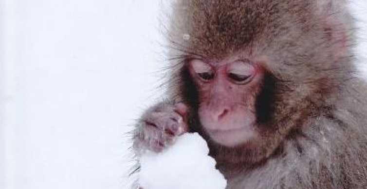 Nagano: Snow Monkeys, Zenkoji Temple & Sake Day Trip
