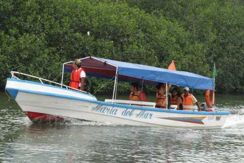 Puerto El Morro Dolphin Watching Activity from Guayaquil
