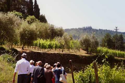 Verona: Amarone Wine Tasting