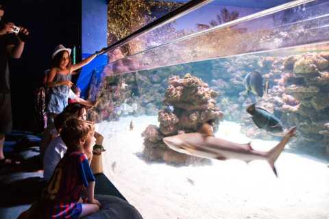 Mallorca: Palma akvariumsbillett