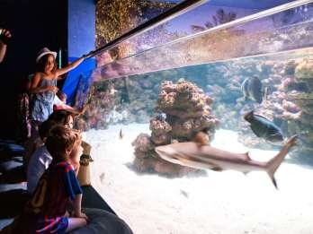 Mallorca: Kombi-Ticket Palma Aquarium & AquaDome (optional)