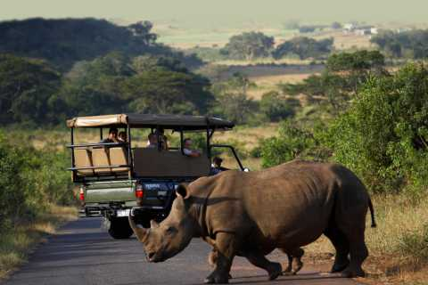 From Durban: Full-Day Hluhluwe-Umfolozi Park Tour