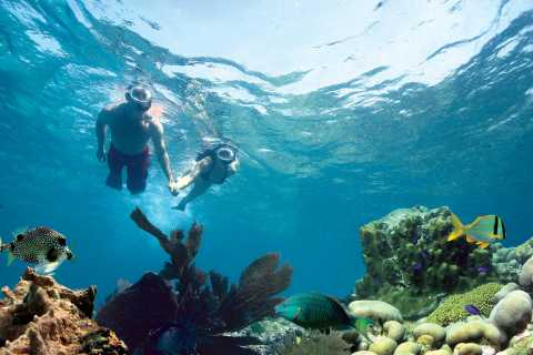 Key West: 3-Hour Snorkeling Adventure