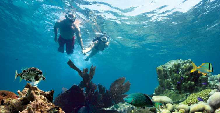 Key West: 3-Hour Snorkeling Adventure
