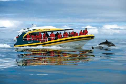 Tasman Island: 3-Hour Wilderness Cruise