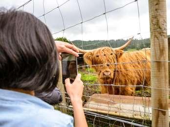 Ab Edinburgh: Loch Ness & Schottisches Hochland an einem Tag