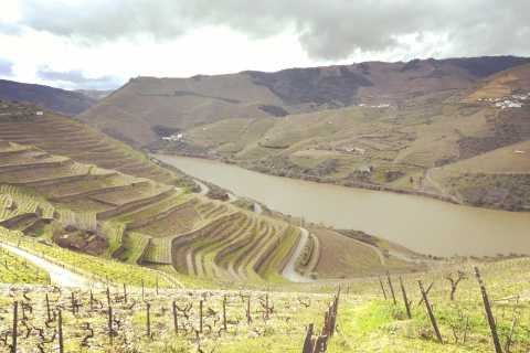 Excursão Douro: O Lar do Vinho do Porto