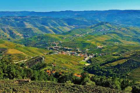 Douro Valley Tour: Three Vineyards, Lunch, and River Cruise