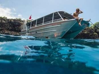 Big Island: Kealakekua Bay Wilde Delfine & Koch-Tour