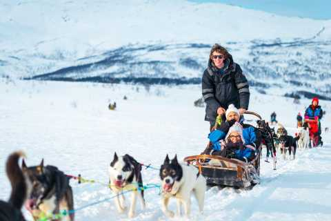 Tromsø: Guided Husky Sledding with Lunch