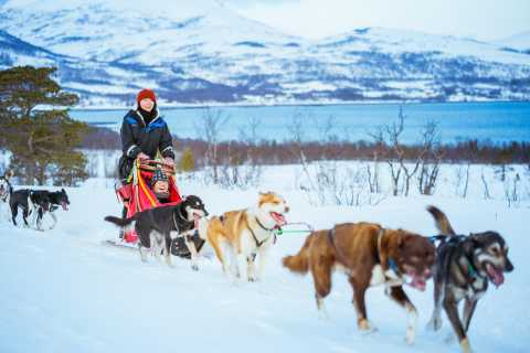 Tromsø: Half-Day Husky Sled Drive with Lunch