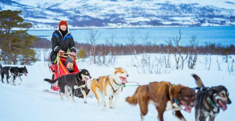 Tromsø: Half-Day Husky Sled Drive with Lunch