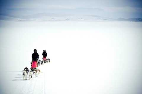 From Tromsø: Epic 5-Day Husky Expedition